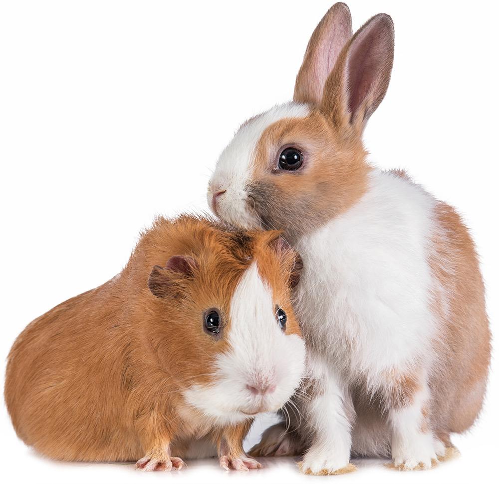 PEI Humane Society - pet care, animal protection