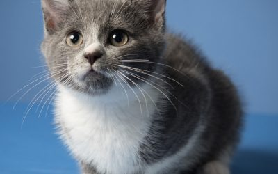 Why Should Pet Owners Spay/Neuter Their Pets?