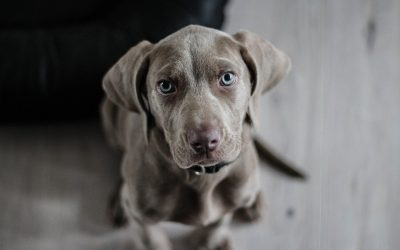 Top 5 Tips for Your First 5 Hours with Your New Dog